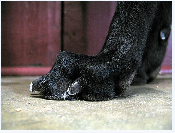 how to keep dogs nails short