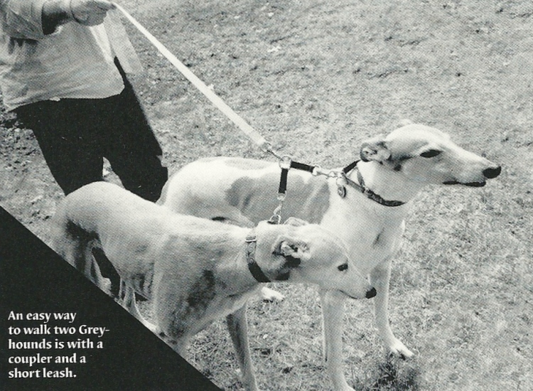 Emery Leash connection photo