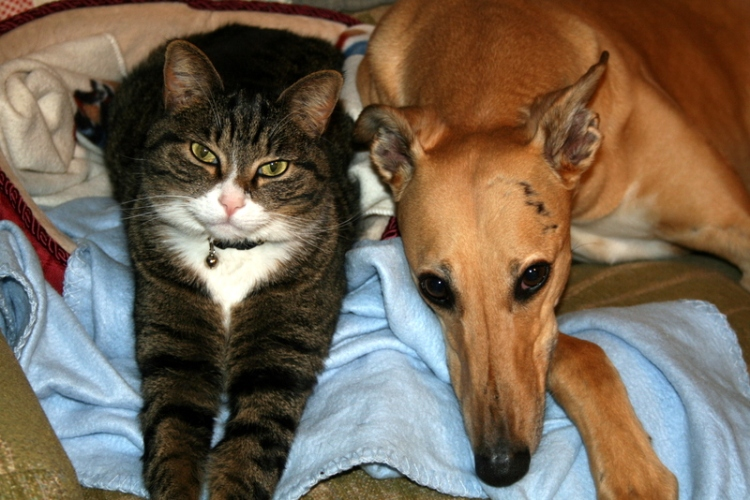 Bella and her cat buddy. Ann Davis