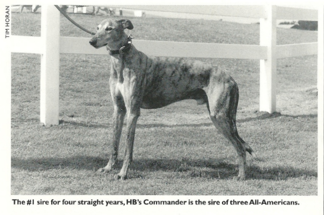 THE PEDIGREE OF HB\'s COMMANDER, THE AMERICAN DERBY, AND WHY RACING ...